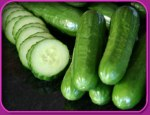 persiancucumbers